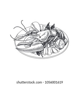 Beautiful vector hand drawn seafood Illustration. Detailed retro style dish with a lobster image. Vintage sketch element for labels, packaging and cards design.
