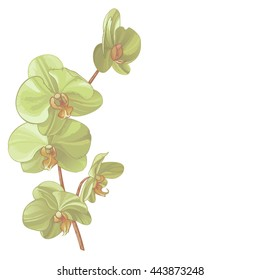 Beautiful vector illustration of green orchid.