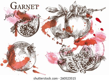 Beautiful vector illustration of pomegranate on the branch, which very juicy and located on the watercolor background