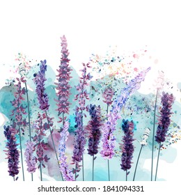 Beautiful vector illustration with spring lavender flowers in watercolor style