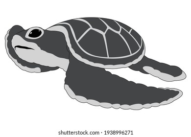 Beautiful vector kid turtle with white background