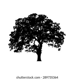 Beautiful vector tree silhouette outline vector icon for nature apps and websites