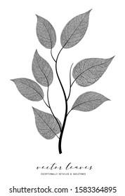 Beautiful vein leaf isolated on background. Black and white elegant illustration. Minimalism style. Black and white vintage modern object