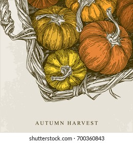 Beautiful vintage background. Autumn harvest. Basket with pumpkins. Vector illustration.