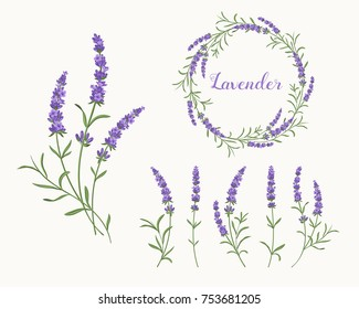 Beautiful violet lavender collection: a wreath, bunch of flowers and separate  inflorescences