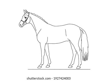 Beautiful warmblood horse stands in profile. Vector isolated illustration.