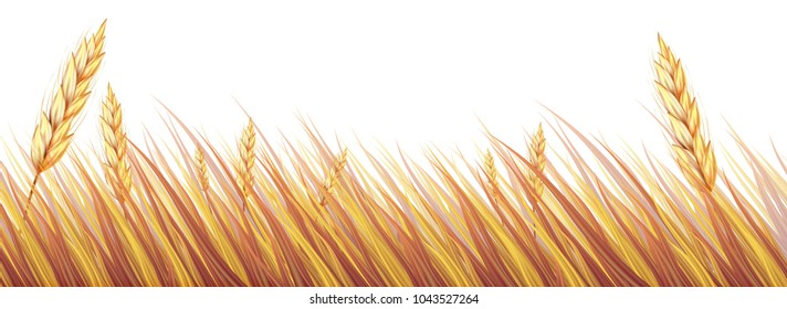 Beautiful Wheat Field or Rice on White background,design for packaging and advertising vector illustration.