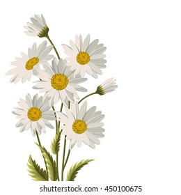 Beautiful white daisies on white background. Floral vector background.