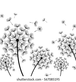 Beautiful white nature background with black dandelions and flying fluff. Floral stylish trendy wallpaper with summer or spring flowers. Modern backdrop. Vector illustration
