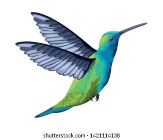 beautiful wild birds hummingbird icon cartoon vector illustration graphic design