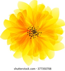 beautiful yellow daisy flower isolated. for greeting cards and invitations of wedding, birthday, mother's day and other seasonal holiday