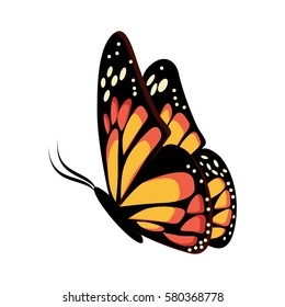 Beautiful yellow and orange sitting or flying butterfly Monarch. Cartoon vector illustration in flat style isolated on white background.