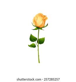 Beautiful yellow rose. Isolated vector illustration.