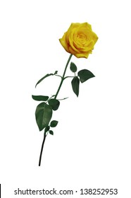 Beautiful yellow rose on long stem isolated on white background. Vector realistic illustration.