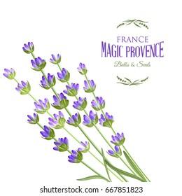 Beauty lavender skin care design. Regenerate cream and Vitamin Background of Concept Skin Care Cosmetic. Vector illustration.