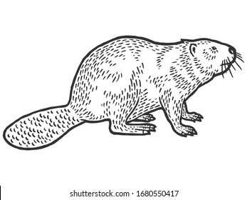 Beaver rodent mammal. Scratch board imitation. Black and white hand drawn image. Engraving vector illustration
