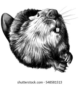 beaver round black and white sketch on a white background