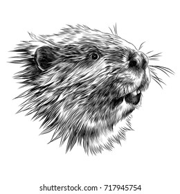 beaver sketch vector graphics monochrome black-and-white drawing head