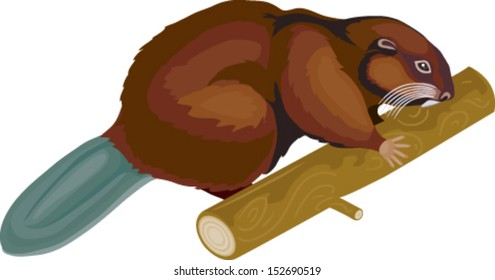 beaver in vector art