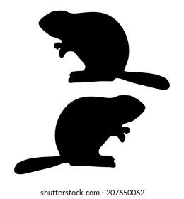 beaver vector on white background, template for design