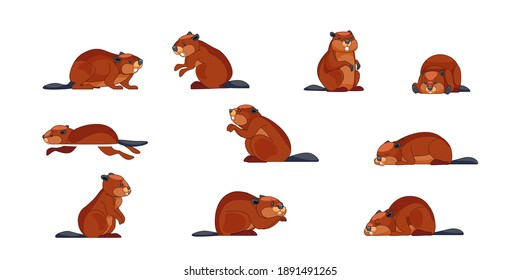 Beaver wild animal set vector illustration. Funny character in various poses cartoon design. Groundhog day concept. Isolated on white background.