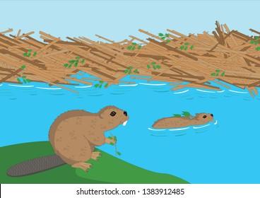 Beavers working on dam vector illustration