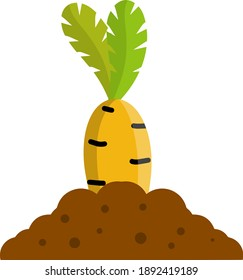 Bed with the carrot. Cartoon flat illustration. Growing vegetables on platform. Brown ground. Natural food. Element of farm and village