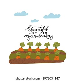 A bed of carrots for the vegetable garden. Lettering text - beautiful day for gardening. Vector illustration of the gardener's work. Banner of the kitchen garden .