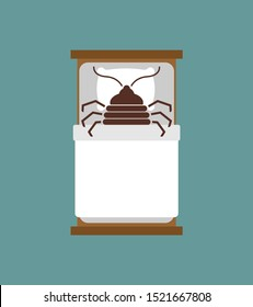 Bedbug in bug. chinch insect vector illustration