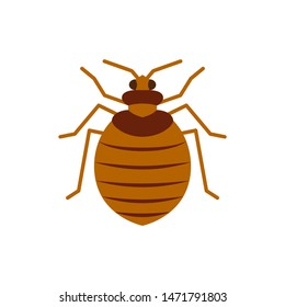 Bedbug single flat icon. Bug simple sign, cartoon style. Insect pest symbol. Wildlife pictogram. Entomology closeup color vector illustration isolated on white. Graphic design element for card, logo
