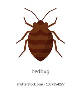 Bedbug. Vector illustration of an insect.