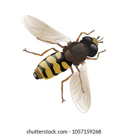 Bee, animal, vector