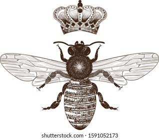 Bee and crown vintage illustration