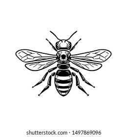 Bee Detailed vector illustration engraving style black on white background