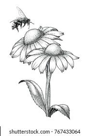 Bee with flowers hand drawing engraving style isolate on white background