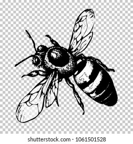 Bee hand drawing, black sketch insect on a transparent background. Vector illustration