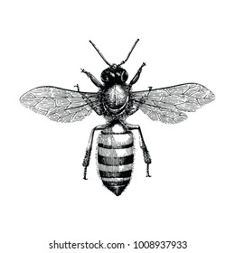 Bee hand drawing vintage engraving illustration isolate on white background