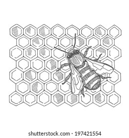 bee with honey, vector hand drawing