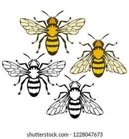 bee logo, honey bee on white background, hand drawn sketch of bee, vector artwork