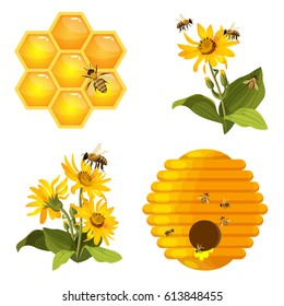 Bee on honeycomb, beehive nest, bees on yellow field flowers set isolated on white background. Realistic striped insect with wings gather fresh healthy organic honey vector illustration
