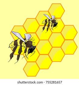 Bee on honeycombs, honey carries in honeycombs