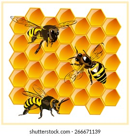 Bee sitting on honeycomb with honey. Vector.