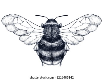 Honey Bee Tattoo Images Stock Photos Vectors Shutterstock