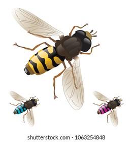 A bee, vector