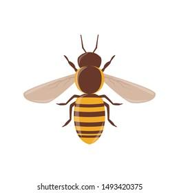 Bee vector clip-art, isolated cartoon style design.