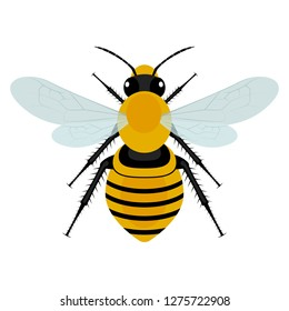 Bee vector design illustration