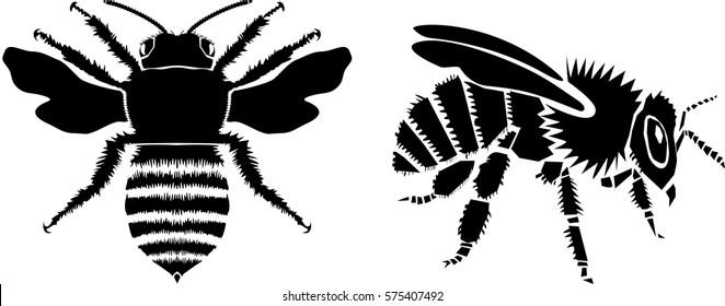 Bee, vector illustration