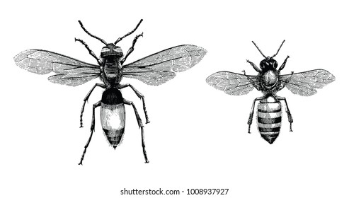 Bee Drawing Images Stock Photos Vectors Shutterstock