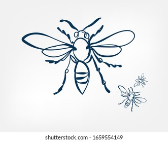 bee wasp insect vector art line isolated doodle illustration