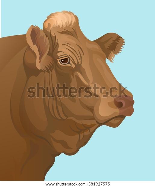 beef bull's head